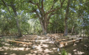 Forest seating wedding